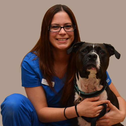Stephanie, Certified Veterinary Technician, CCRP