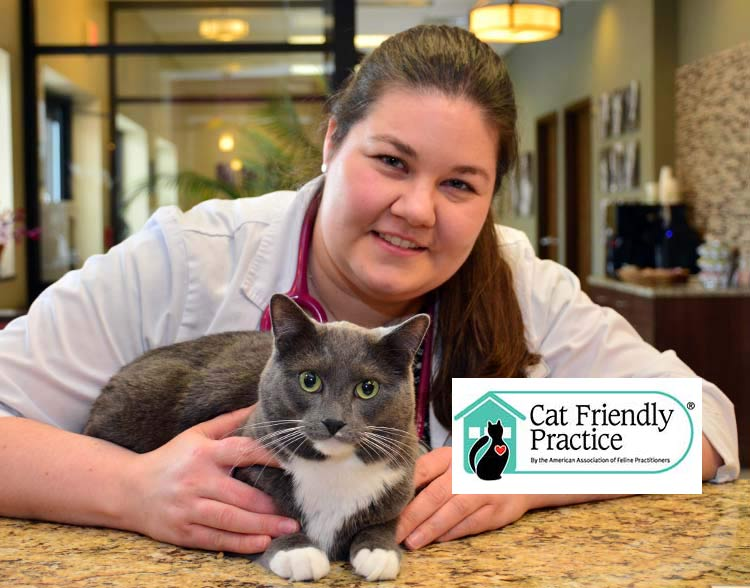 Cat Friendly Practice in Northbrook IL