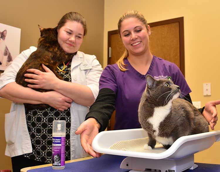 Feline Veterinarian in Northbrook IL