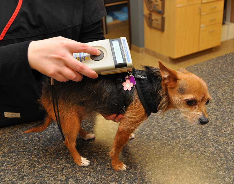 Pet Microchipping in Northbrook IL