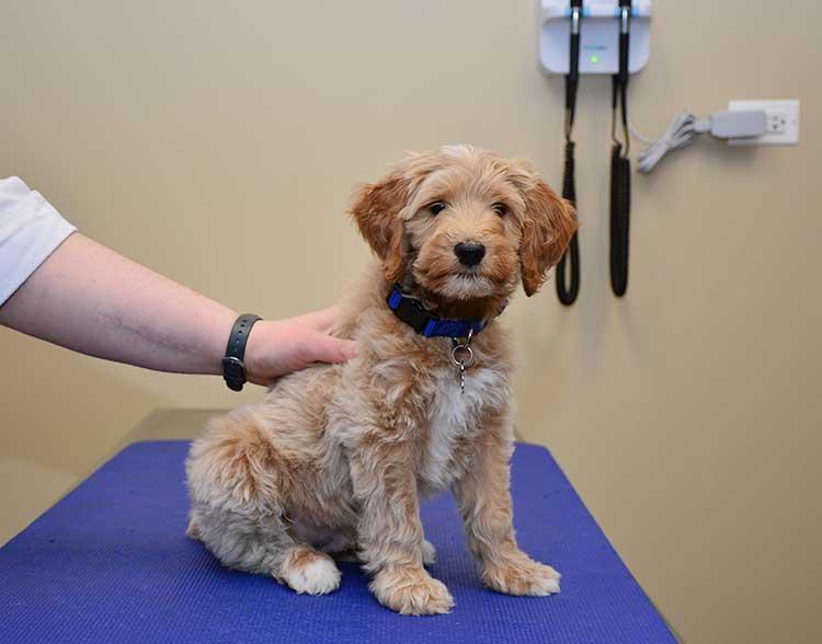 Prescription Veterinary Diets in Northbrook IL