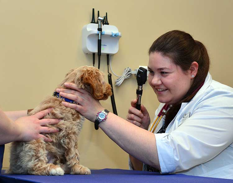 Puppy Veterinarian in Northbrook IL
