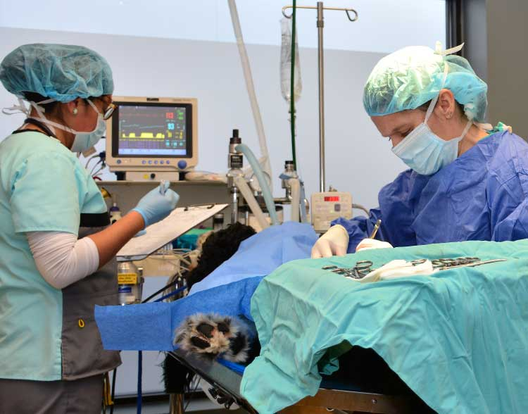 Animal Hospital in Northbrook IL